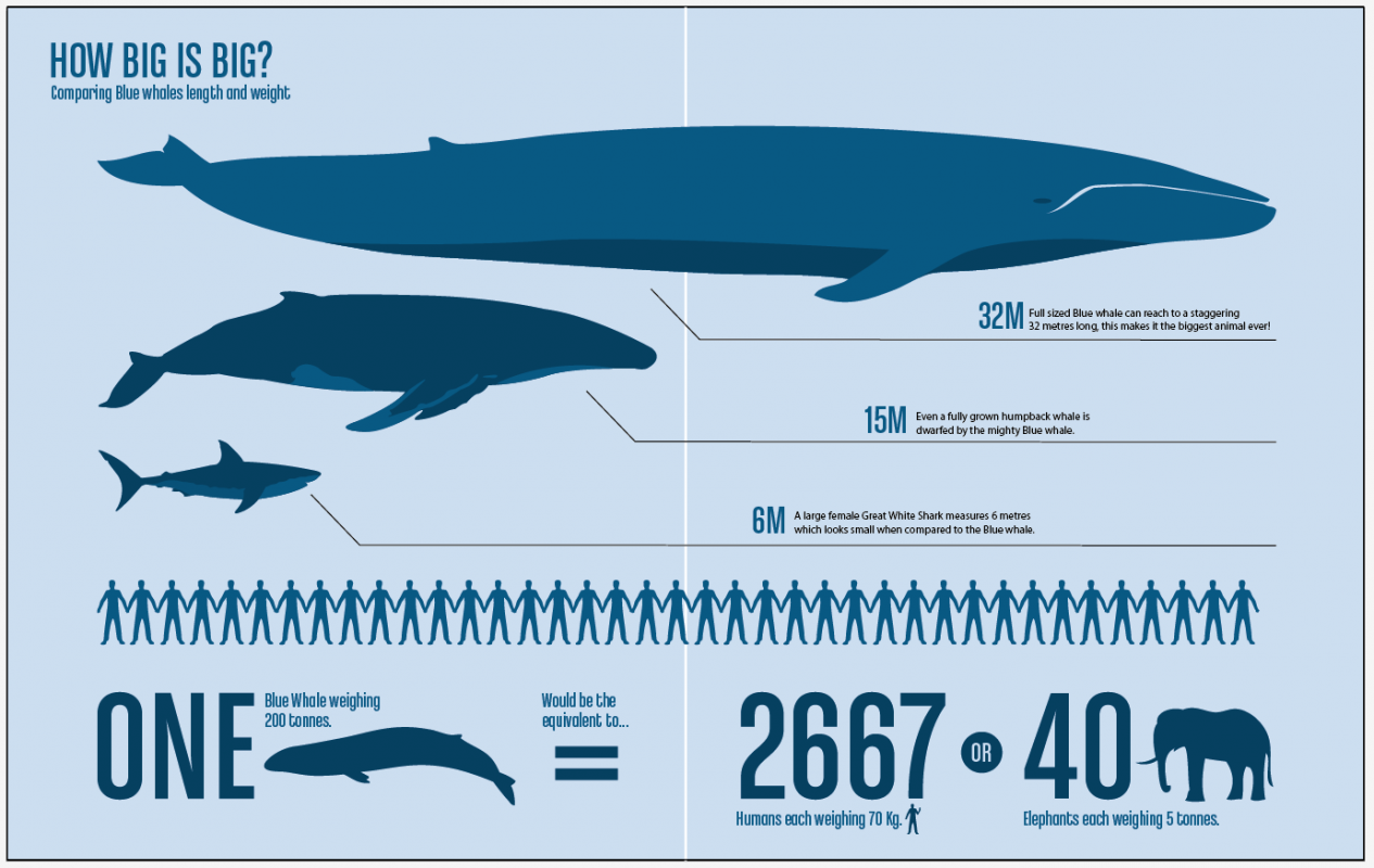 How much does the whale weigh