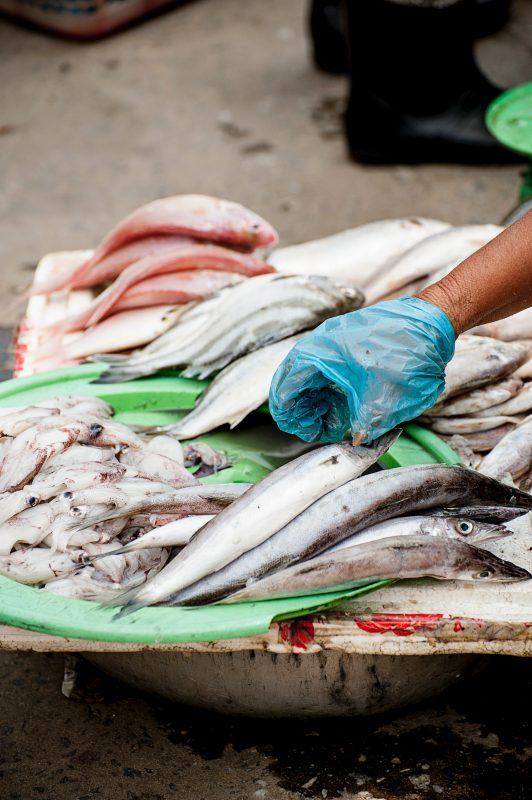 sea food to protect ocean