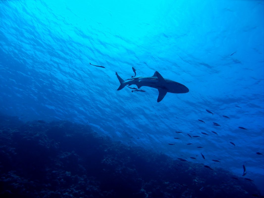 incredible fact about sharks