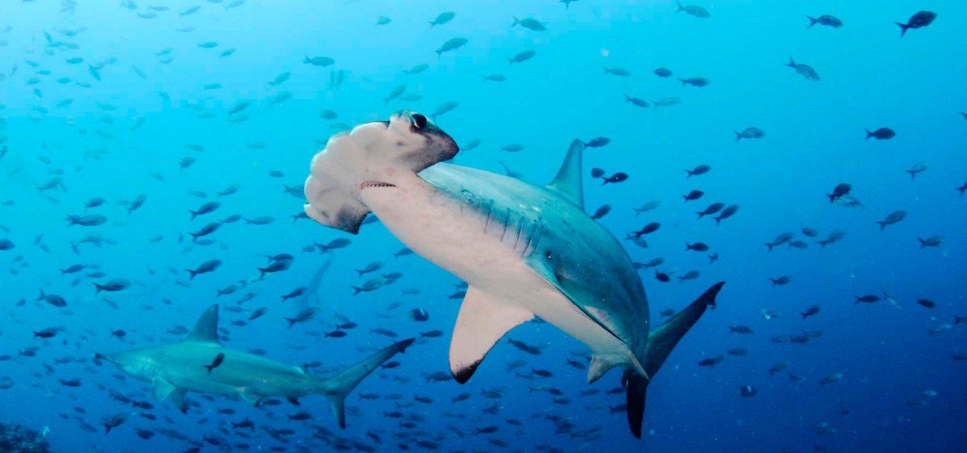 top diving destinations hammerhead shark