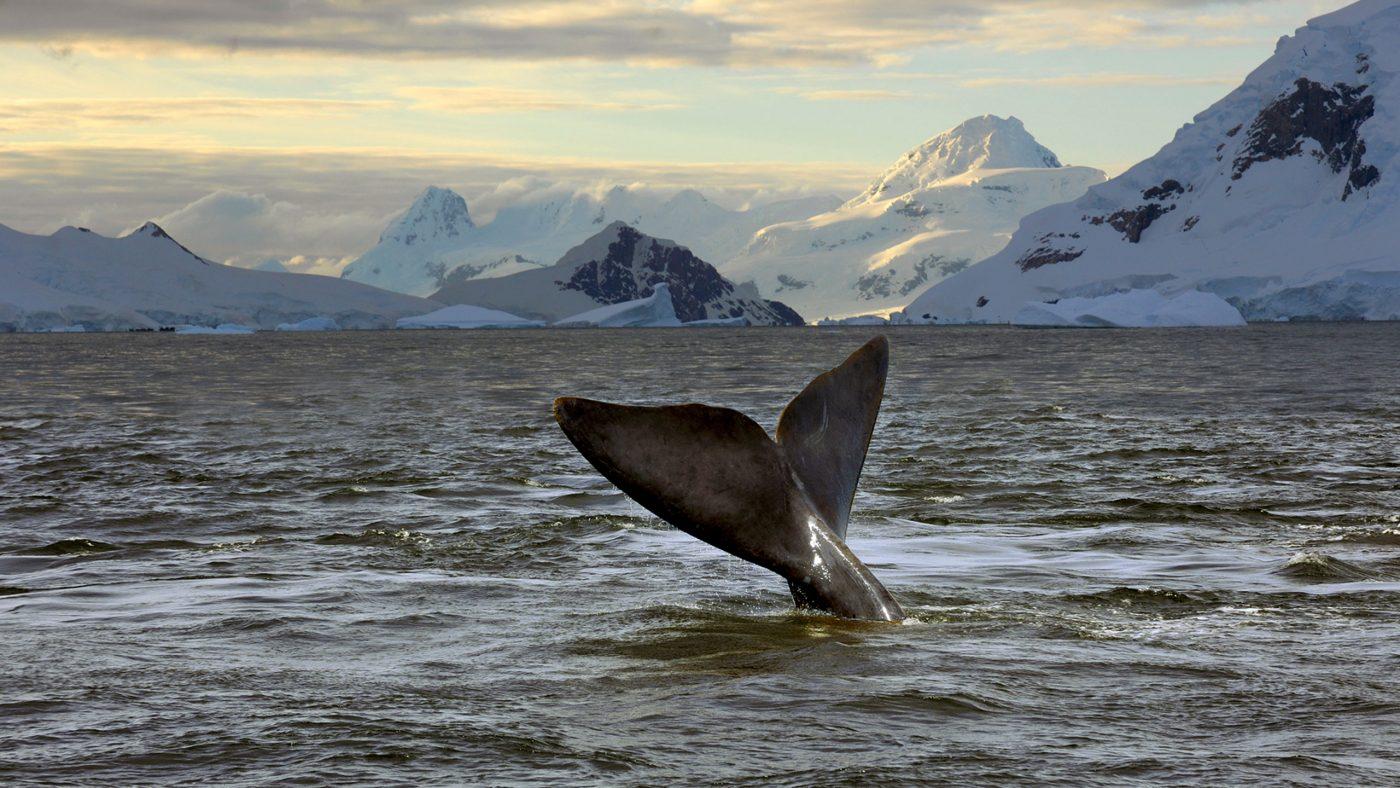 top diving destinations whale