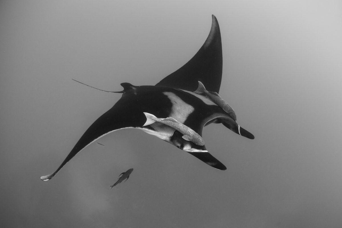 underwater pictures shots