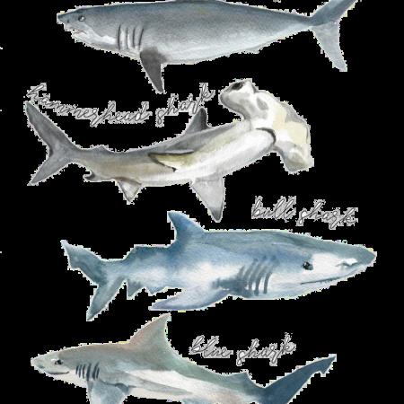 tshirt shark watercolor