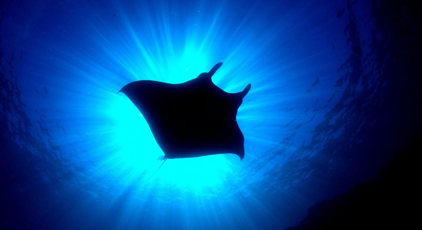 manta ray shadows- tips taking shot underwater