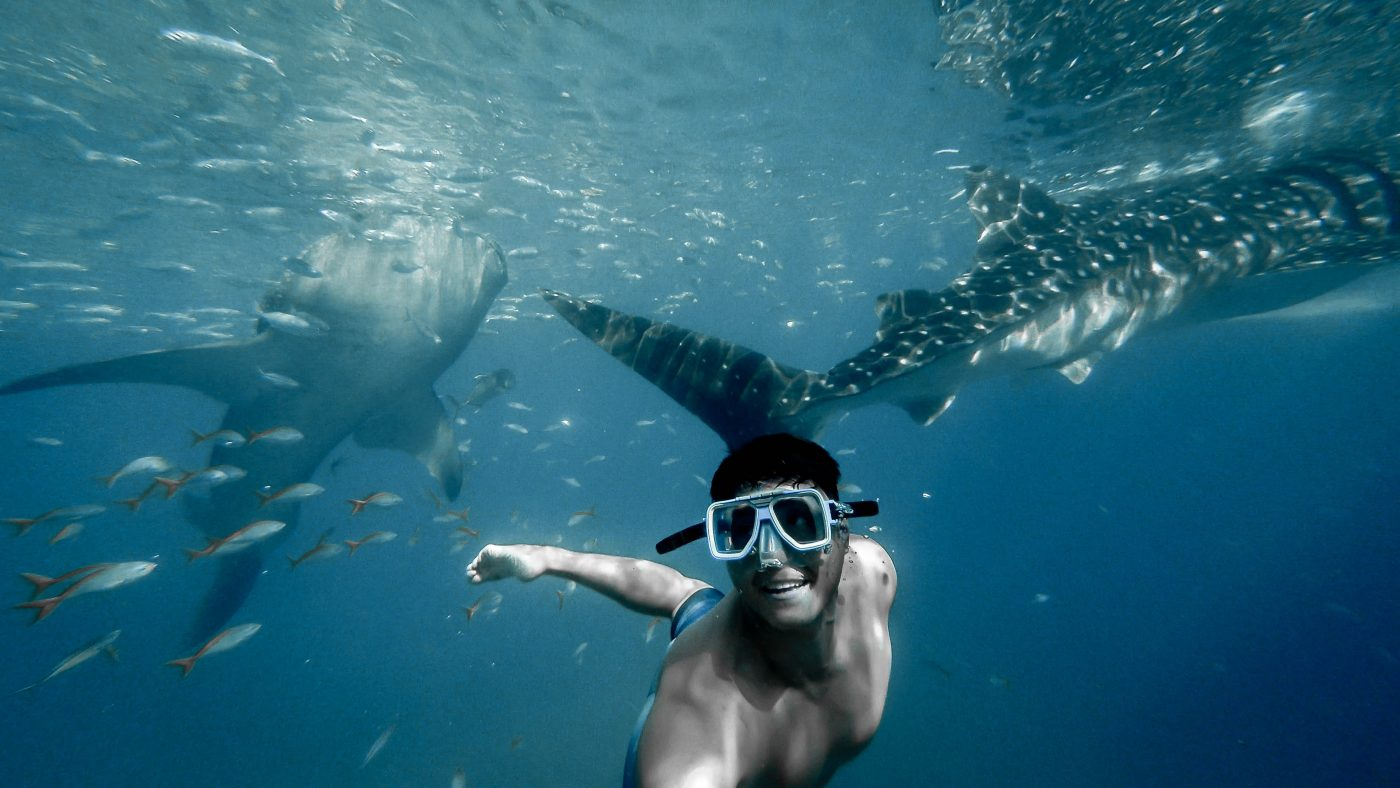 tips underwater pictures whale shark
