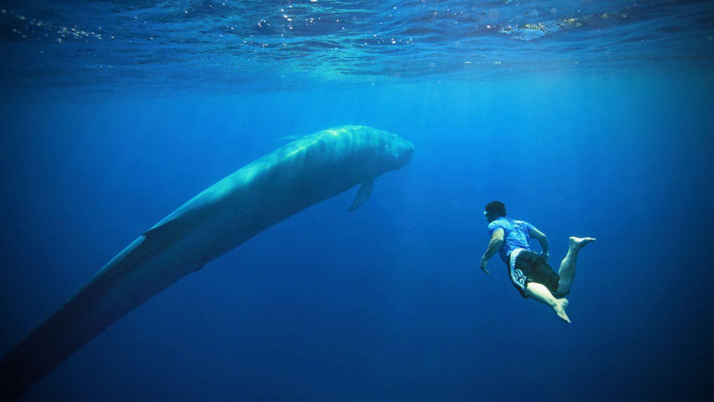 diving blue whale