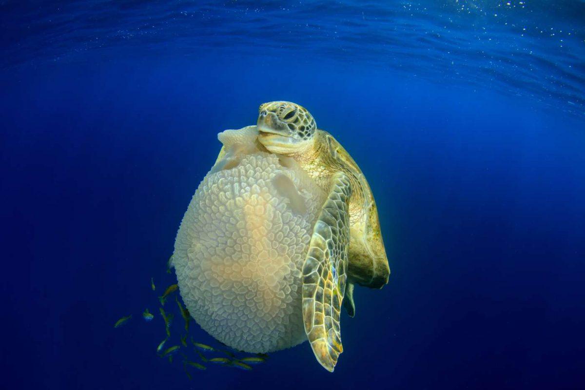 underwater shot tips