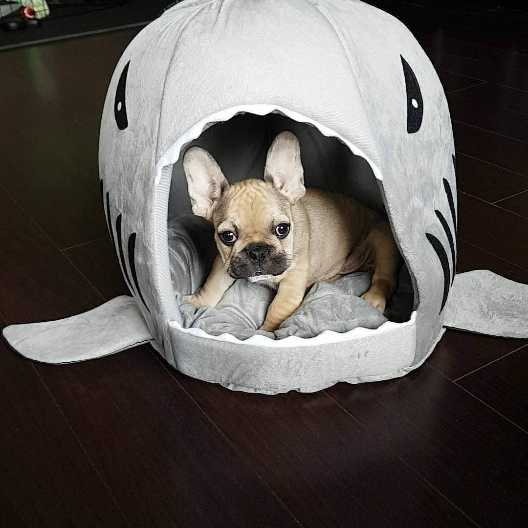 shark dog house