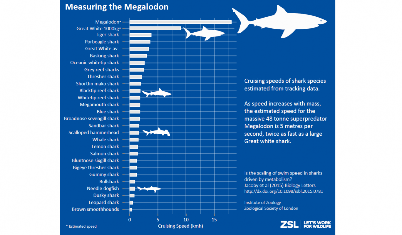 different sharks speed