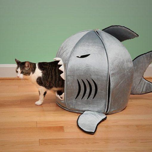 shark cat house