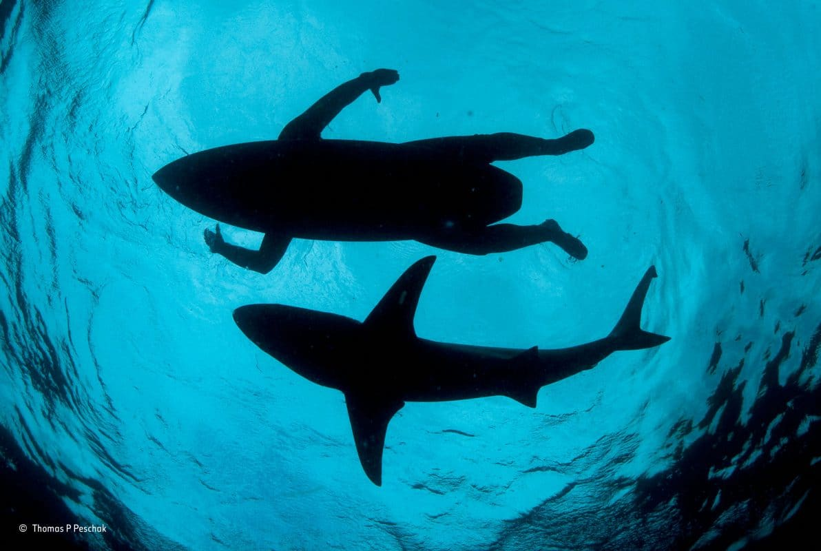 save sharks endangered