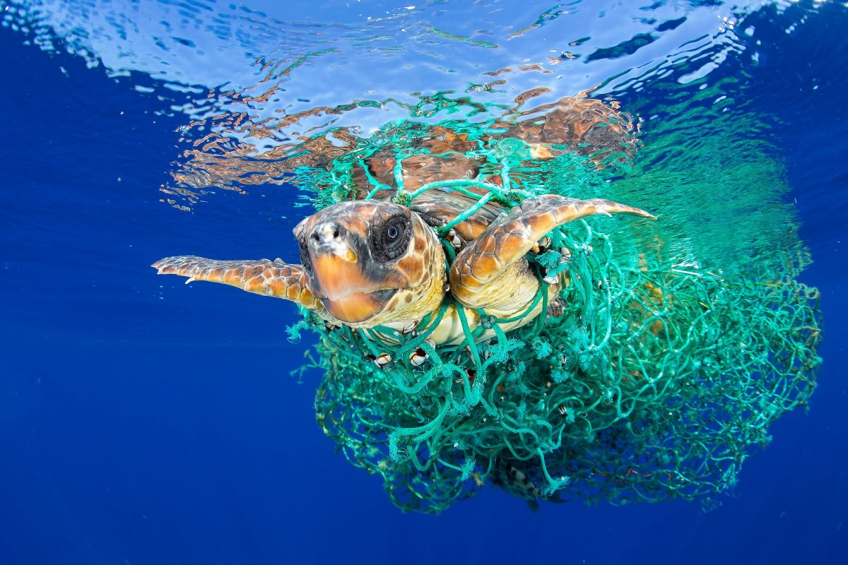 sea turtle ocean plastic pollution
