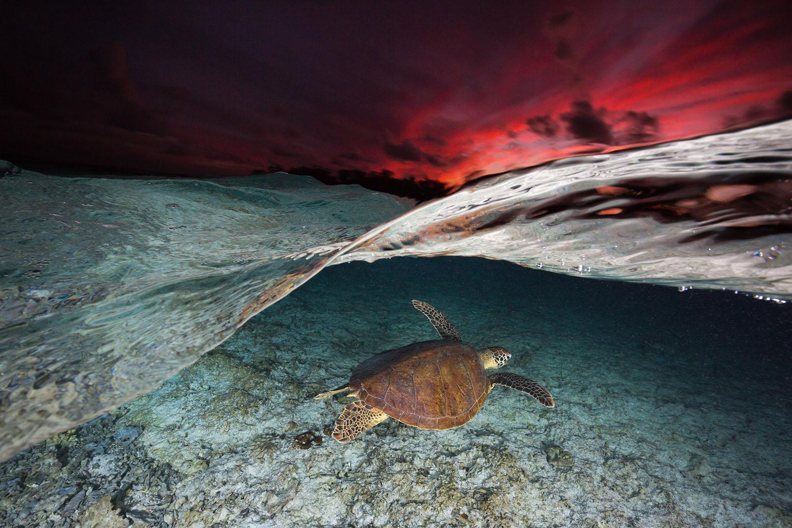 half underwater ocean shot turtle