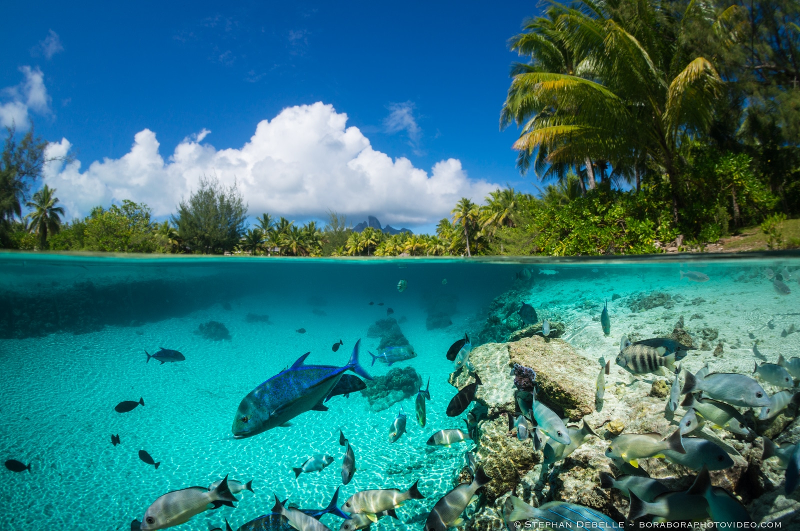 coral reef underwater half shot