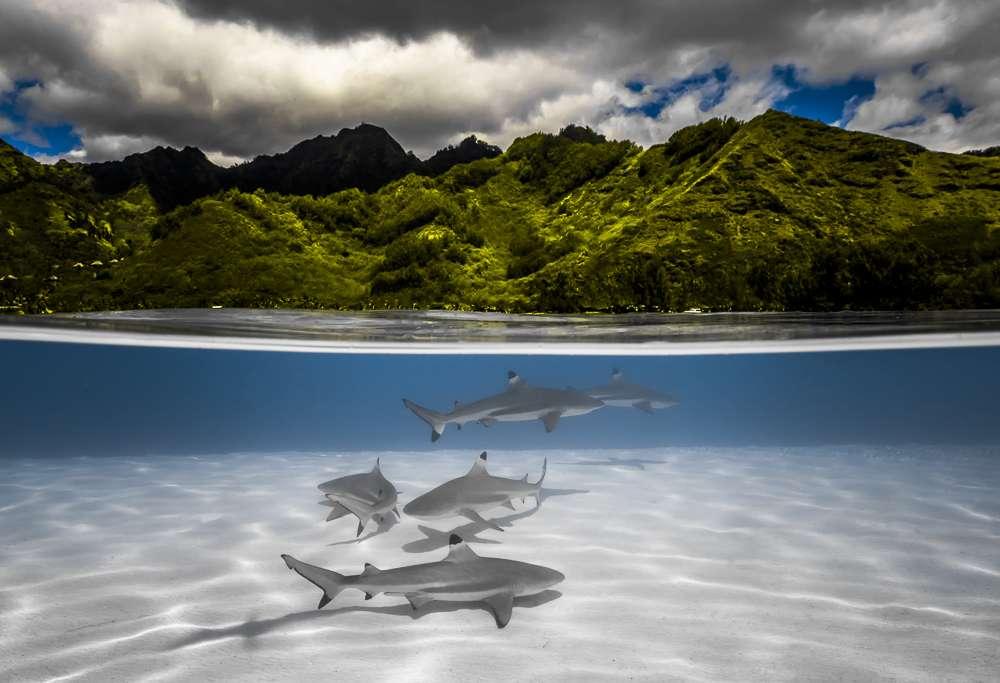 hald underwater shot polynesia