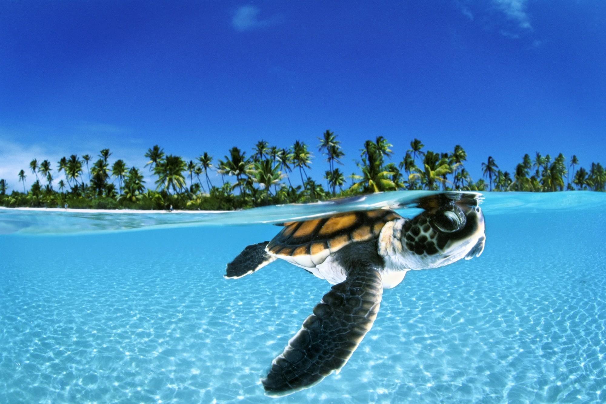 Half underwater picture