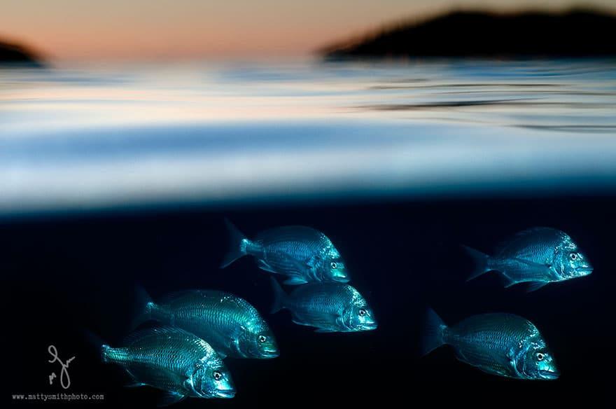 fish Half underwater picture
