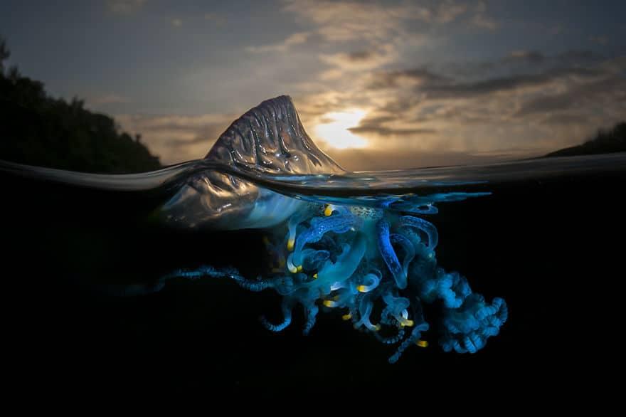 jellyfish Half underwater picture