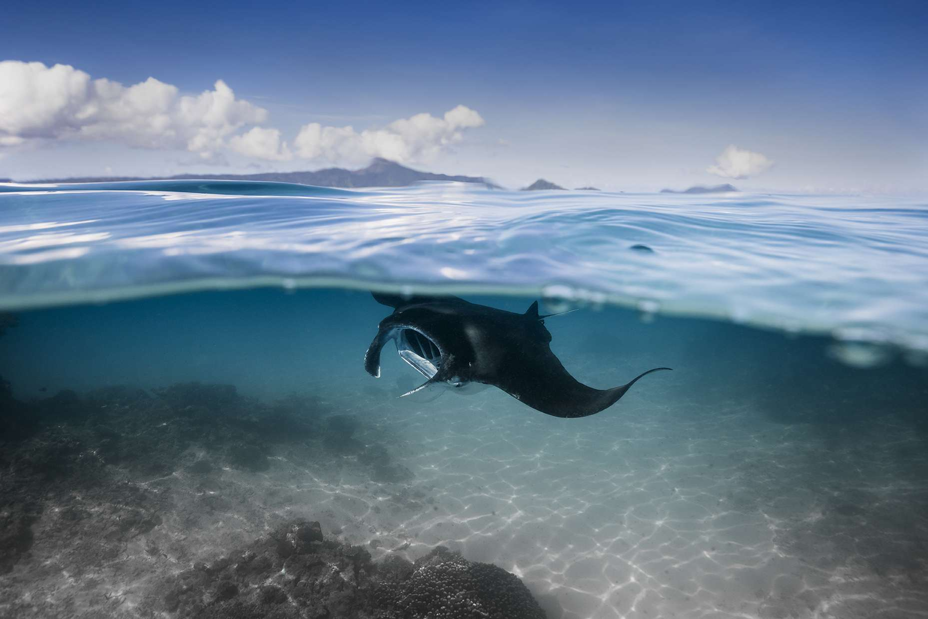 manta ray half underwater shot
