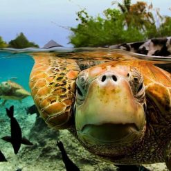 turtle Half underwater picture