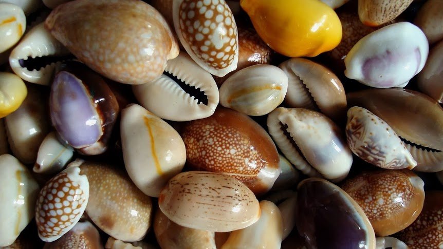 Cowrie Shell meaning and use