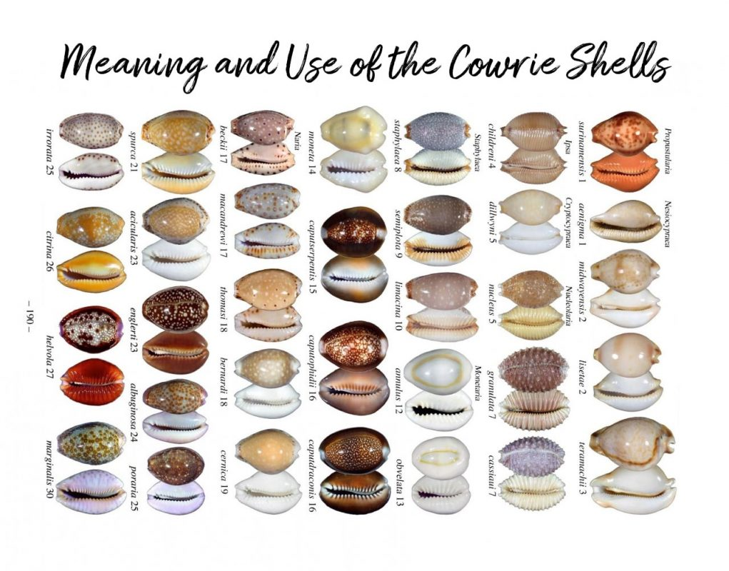 Use and meaning of Cowrie shells