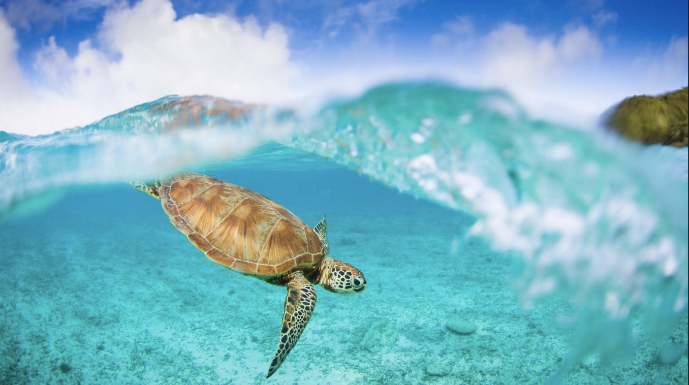 12 interesting facts about Sea Turtles