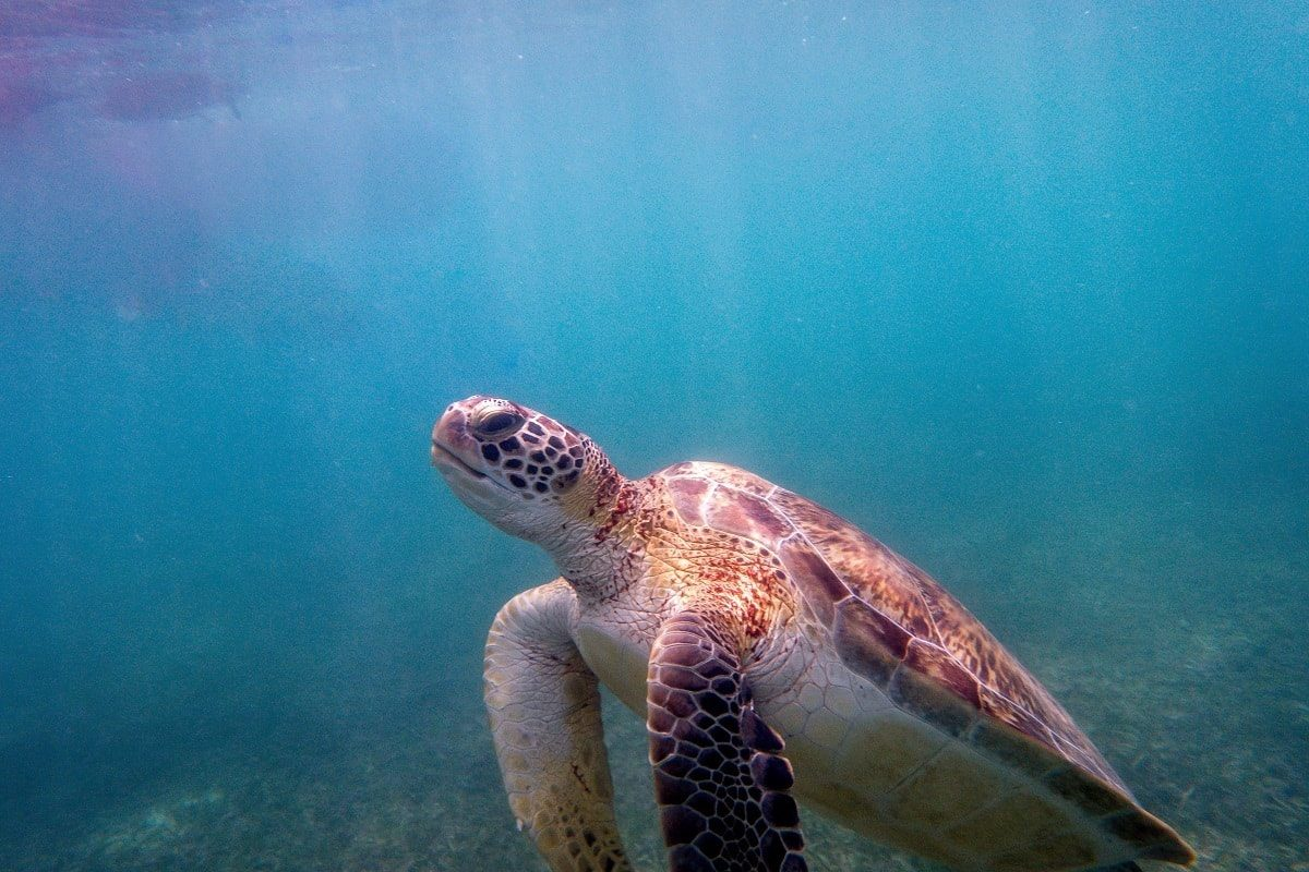 Things You Can Do To Help Save The Sea Turtles
