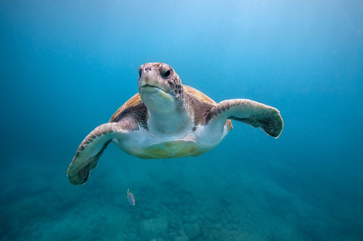Discover 12 interesting facts about Sea turtles