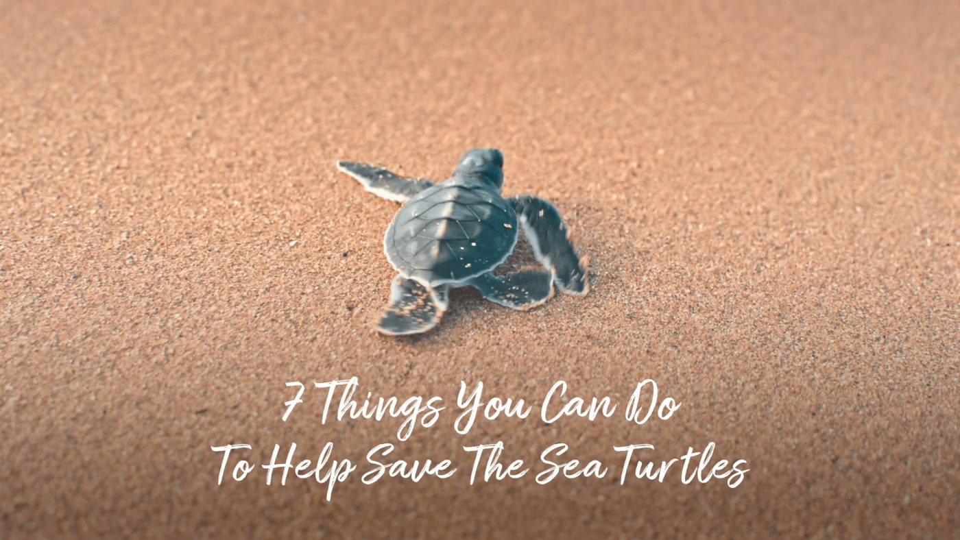 7 ways to help save the sea turtles