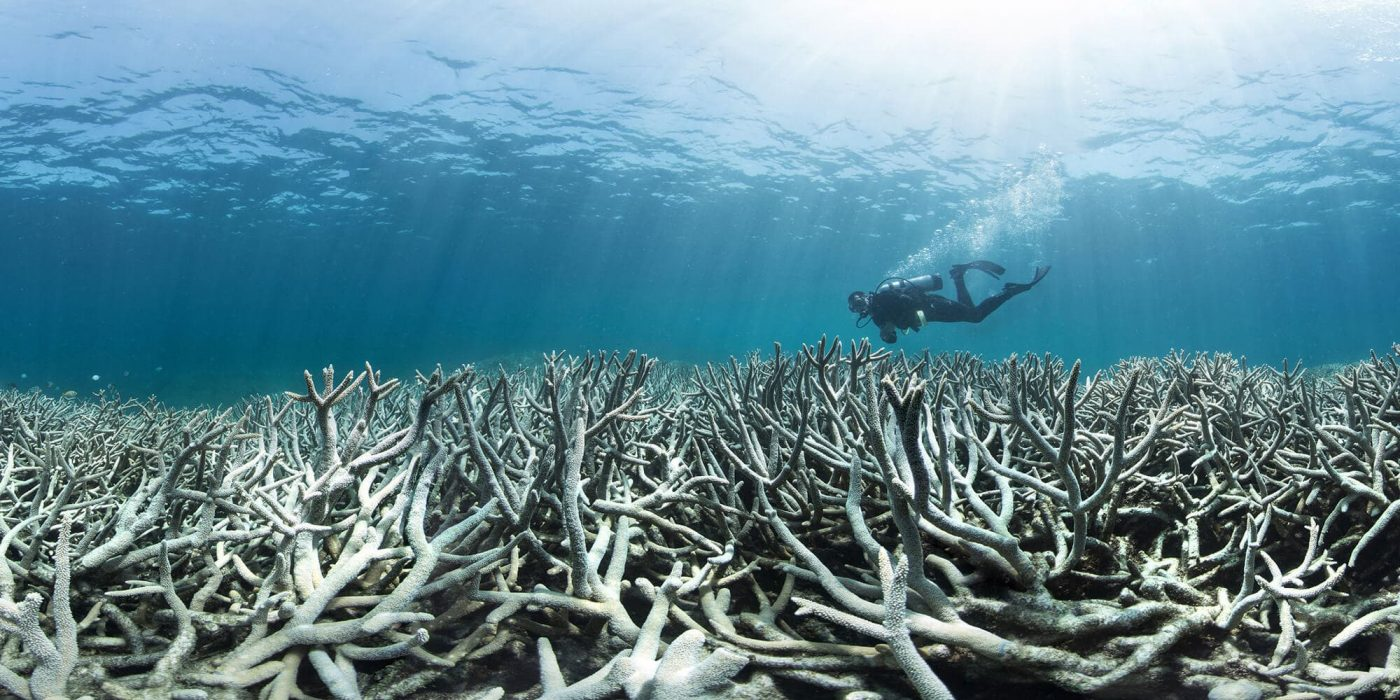 6 Causes of Coral Bleaching