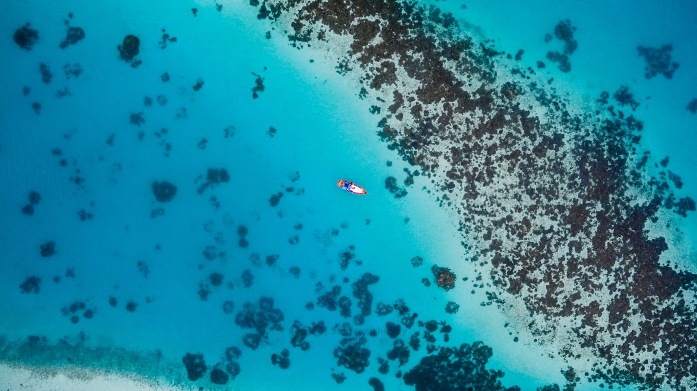 Coral reef bleaching causes