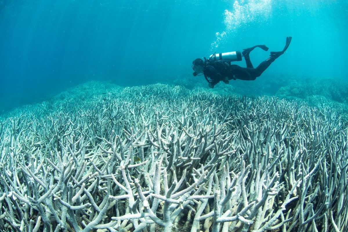 global warming coral bleaching