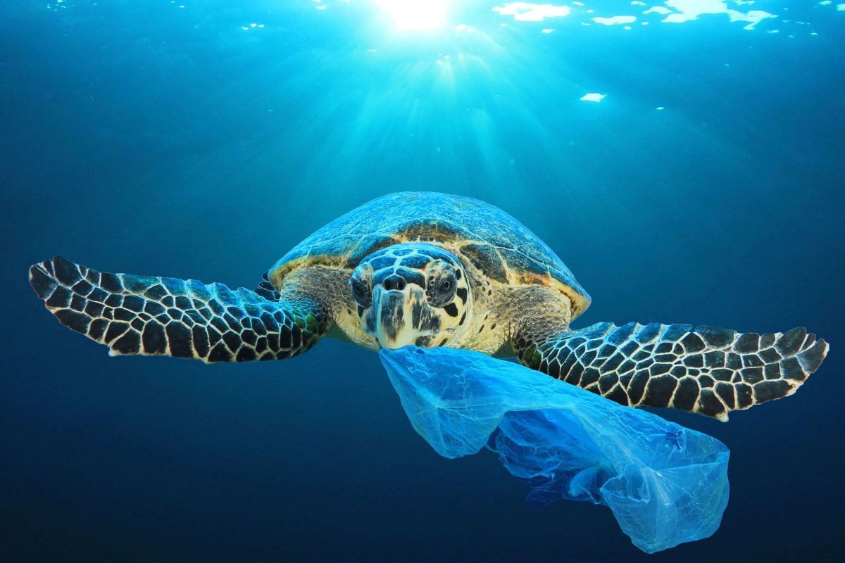 5 Shocking Facts about Plastic bags in the Ocean - Passport Ocean