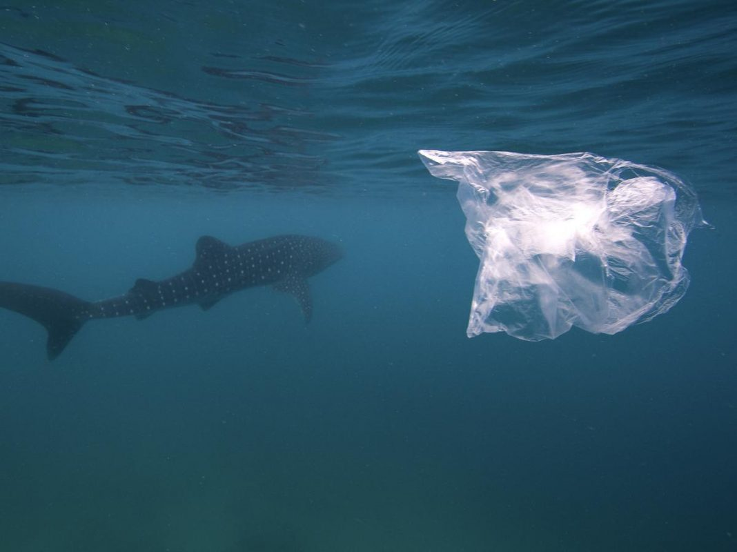5 Shocking Facts about Plastic bags in the Ocean