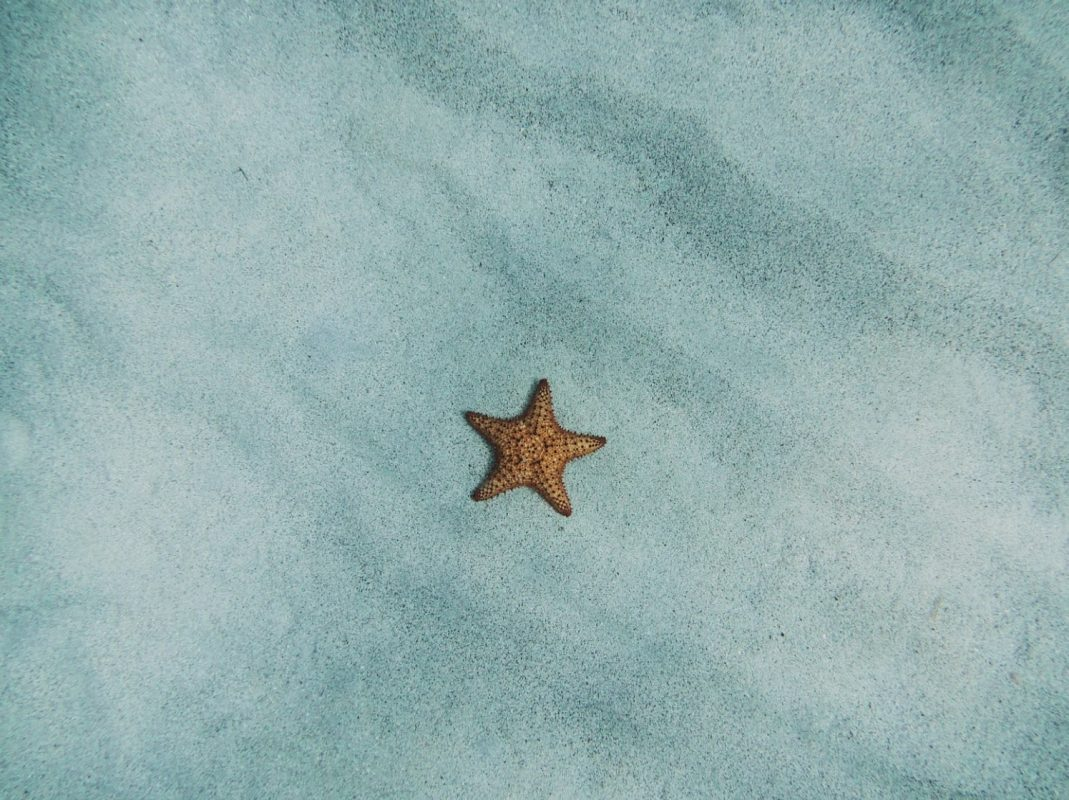 Does Starfish Have Brain ?