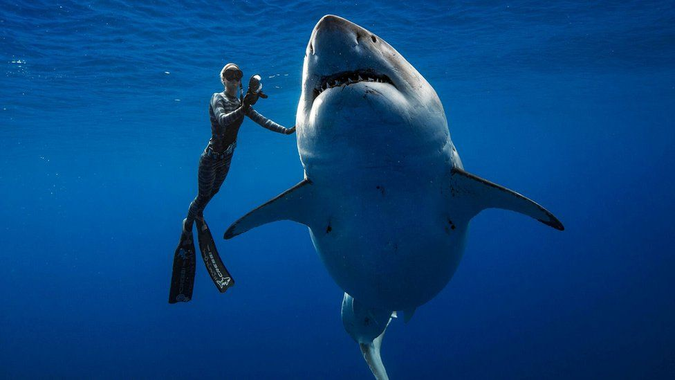 What Are The Biggest Sharks In The World ?