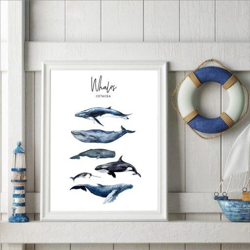 Cetaceas Poster