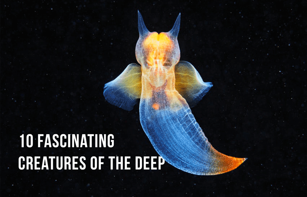 Sea Creatures Of The Deep