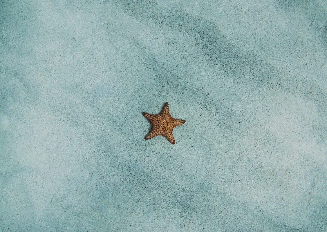How Long Does A Starfish Live?