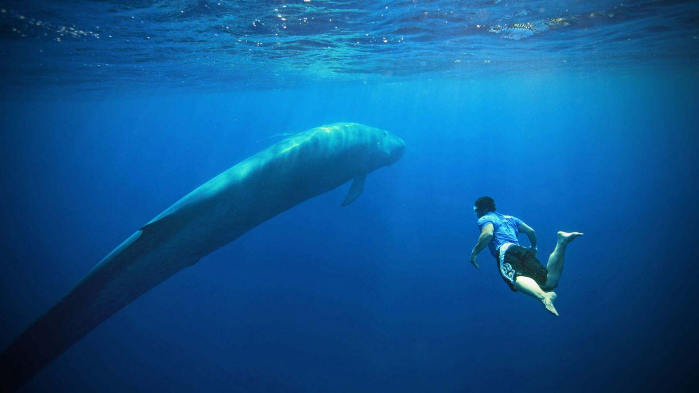 Blue whales endangered